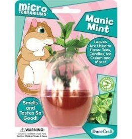 Dune Craft Micro Terrariums,Manic Mint