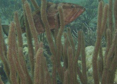 Lauderdale-by-the-sea Shore Dive