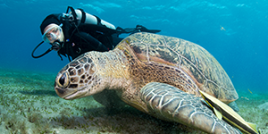 Best South Florida Scuba Certification