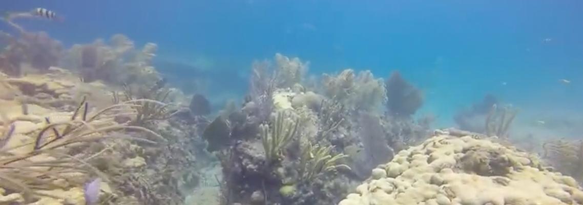 The Nursery Reef