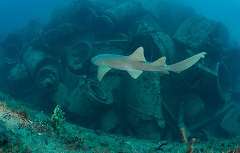South Florida wreck diving