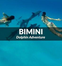 Bimini - Dolphin Adventure