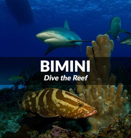 Bimini - Dive the Reef