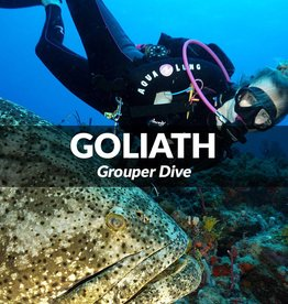Dive with the Goliaths