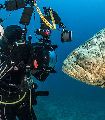 How to photograph goliath groupers