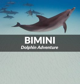 Force-E Bimini- One Day Dolphin Adventure