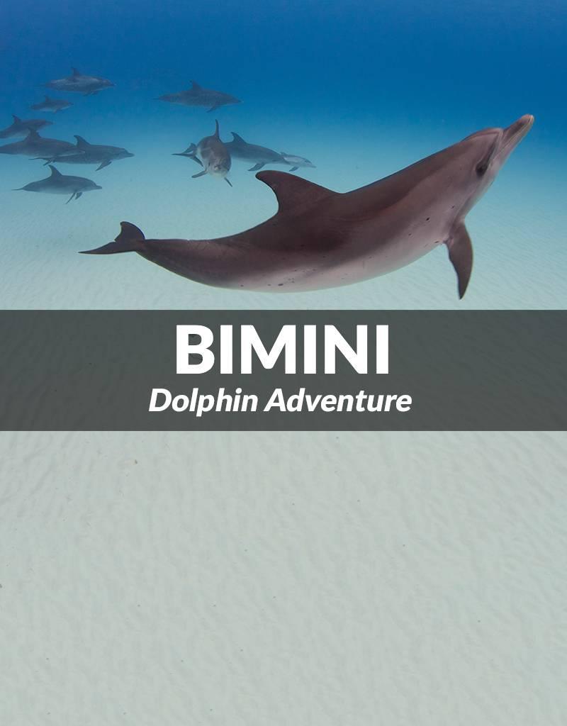 Force-E Bimini- One Day Dolphin Adventure