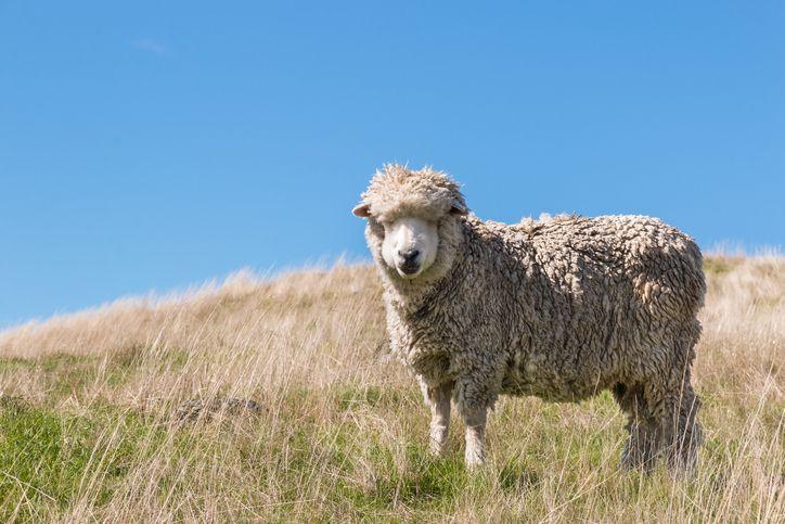 Wool-vangelism
