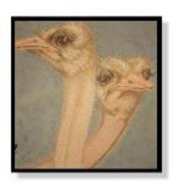 Quail Run Ostrichs 14x14
