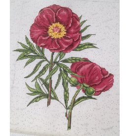"Alice Peterson Red Peony 11""x11"""