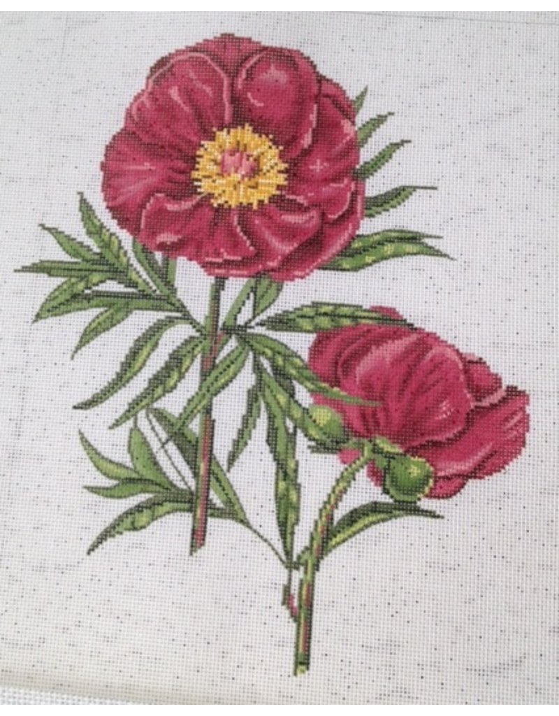 """Alice Peterson Red Peony 11""""x11"""""""