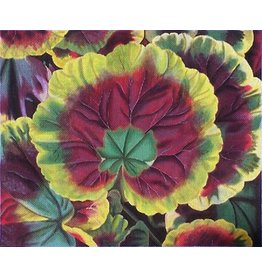 HP Designs Pelargonium<br />
