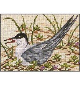 Needle Crossing Common Tern