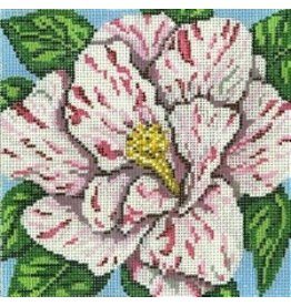 Needle Crossing Striped Camelia<br />
