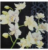 "Kirk &amp; Hamilton White Orchid on Black background<br /> 15.5"" x 16"""