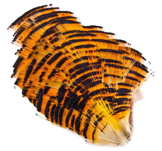 Golden Pheasant Complete Natural Tippet
