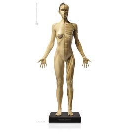Anatomy tools Anatomy Tools Female V1 1:3 Scale Figure