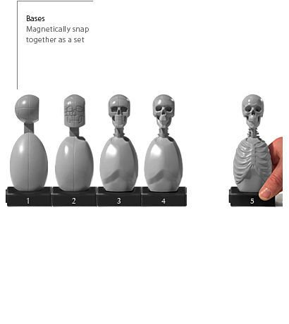 Anatomy tools Anatomy Tools Skeleton Torso 5pc Set