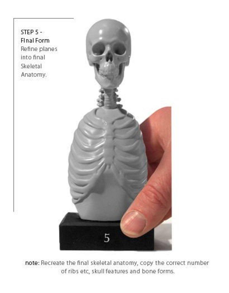 Anatomy tools Anatomy Tools Skeleton Torso 5pc Set