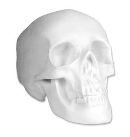 Sculpture House Inc. Plaster Skull (Human)