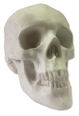 Sculpture House Inc. Plaster Skull (Human)