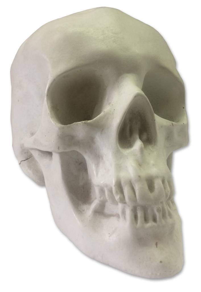 Sculpture House Plaster Skull (Human)