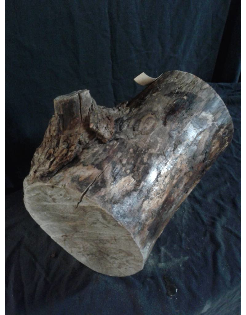 "Wood Hard Maple Log 9""Dx17""H 25lbs #15343"