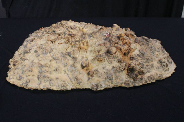 Wood Maple Burl 26x20x7 #30020
