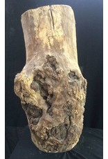 Mother Nature Wood Spalted Maple Burl 19x8x7 #061003