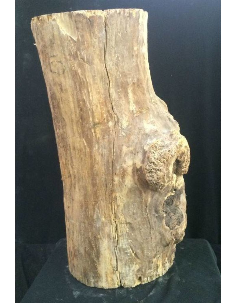 Mother nature wood spalted maple burl x