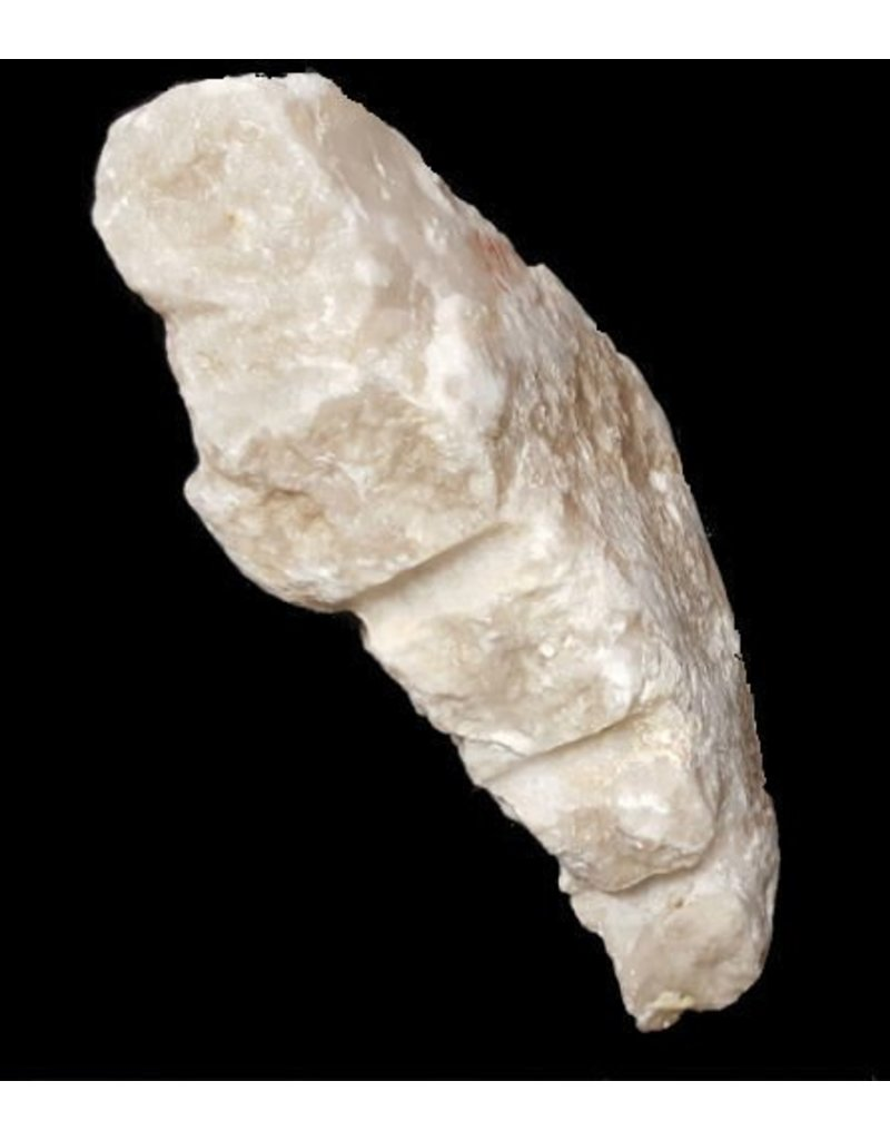 Stone 14lbs Oyster Shell Alabaster 13x7.5x4 #161033