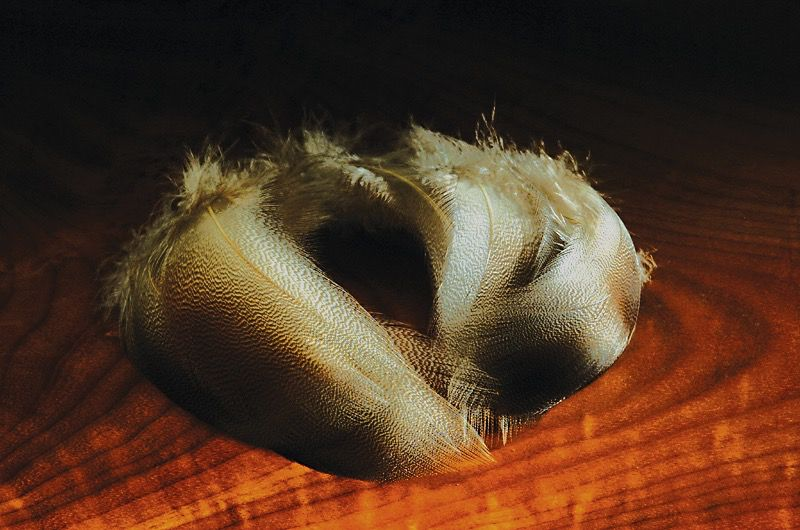 Hareline Bronze Mallard Feathers