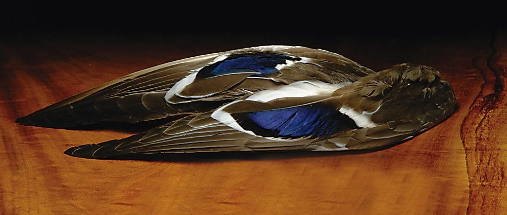 Hareline Mallard Whole Wings