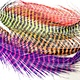 Fish Hunter Barred Rhea Tail Plumes