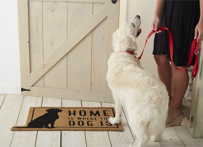 Bucket Monogrammed Dog Collar