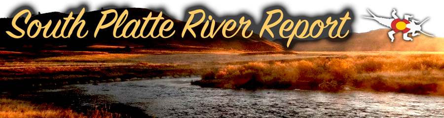 South platte river fly fishing report royal gorge anglers for South platte fishing report