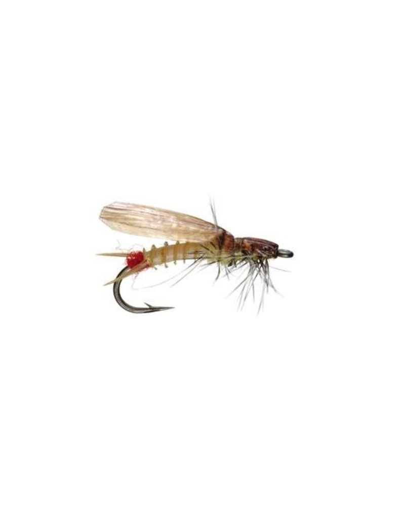 Slow Water Sally (3 Pack)
