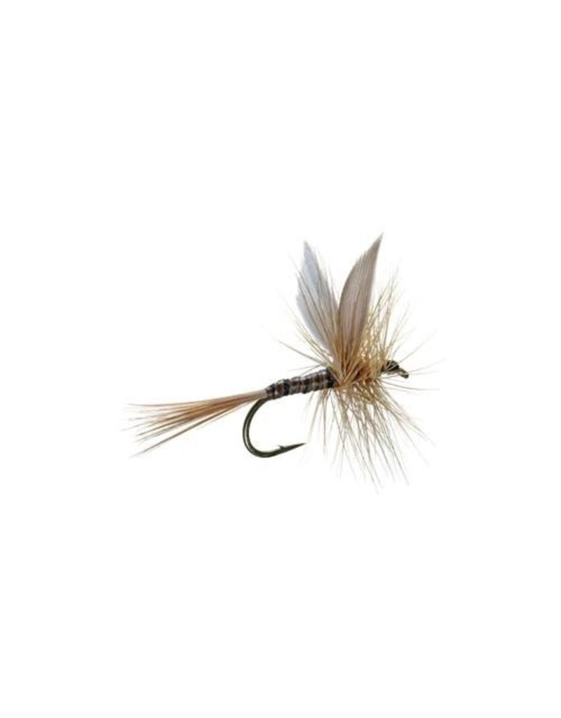 Ginger Quill (3 Pack)