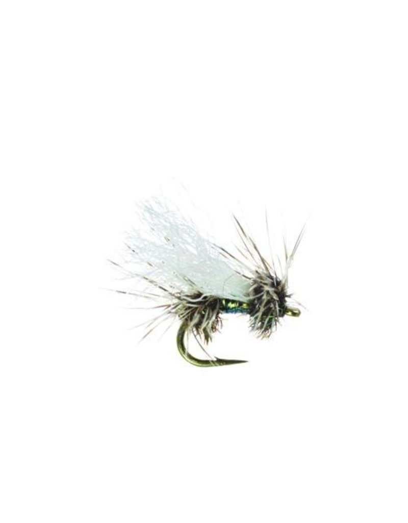 Cluster Peacock, Quigley (3 Pack)