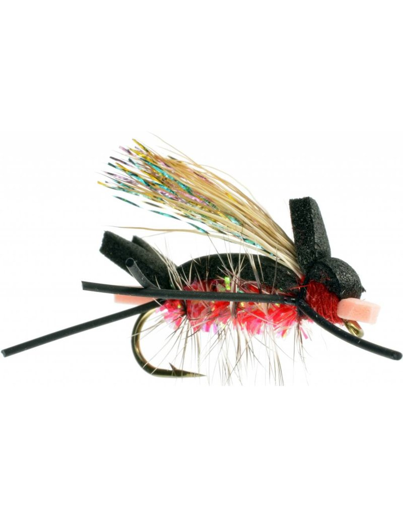 Amy's Ant (3 Pack)