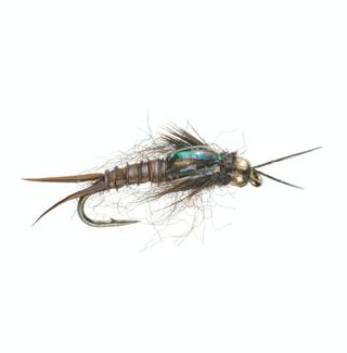 Your NEW breadwinner Golden Stonefly!