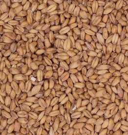 Beer Briess Red Wheat Malt
