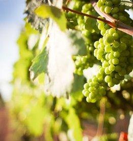 Wine Chardonnay Fresh Grapes 36 lb Box