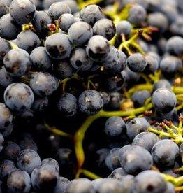 Wine Agliancico Fresh Grapes 36 lb Box