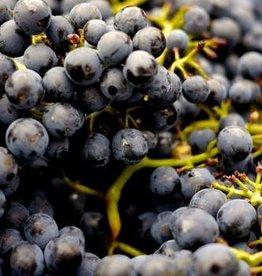 Zinfandel Fresh Grapes 36 Lb Box