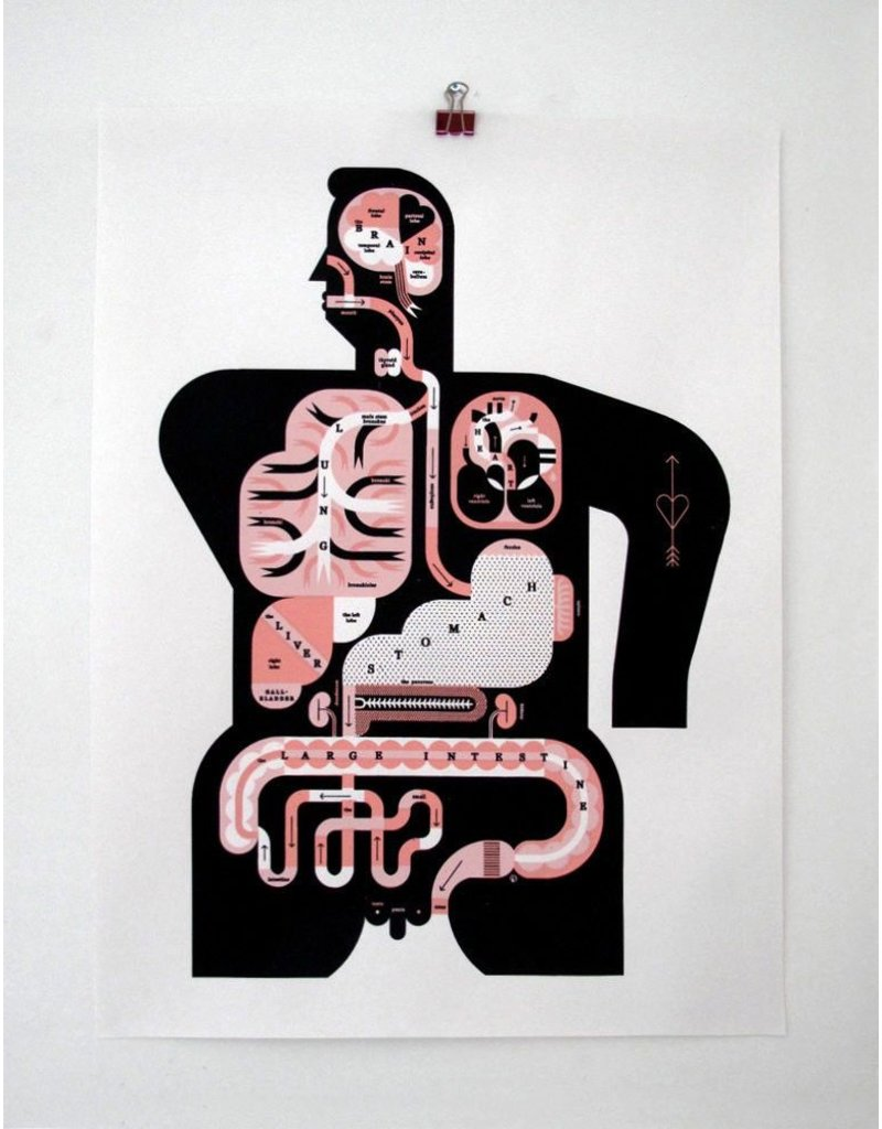 Vivid Print Raymond Biesinger   Male Anatomy 17 x 22 Digital Print