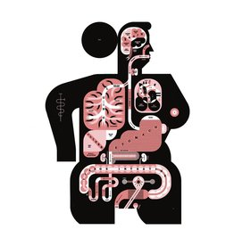 Vivid Print Raymond Biesinger   Female Anatomy 17 x 22 Digital Print