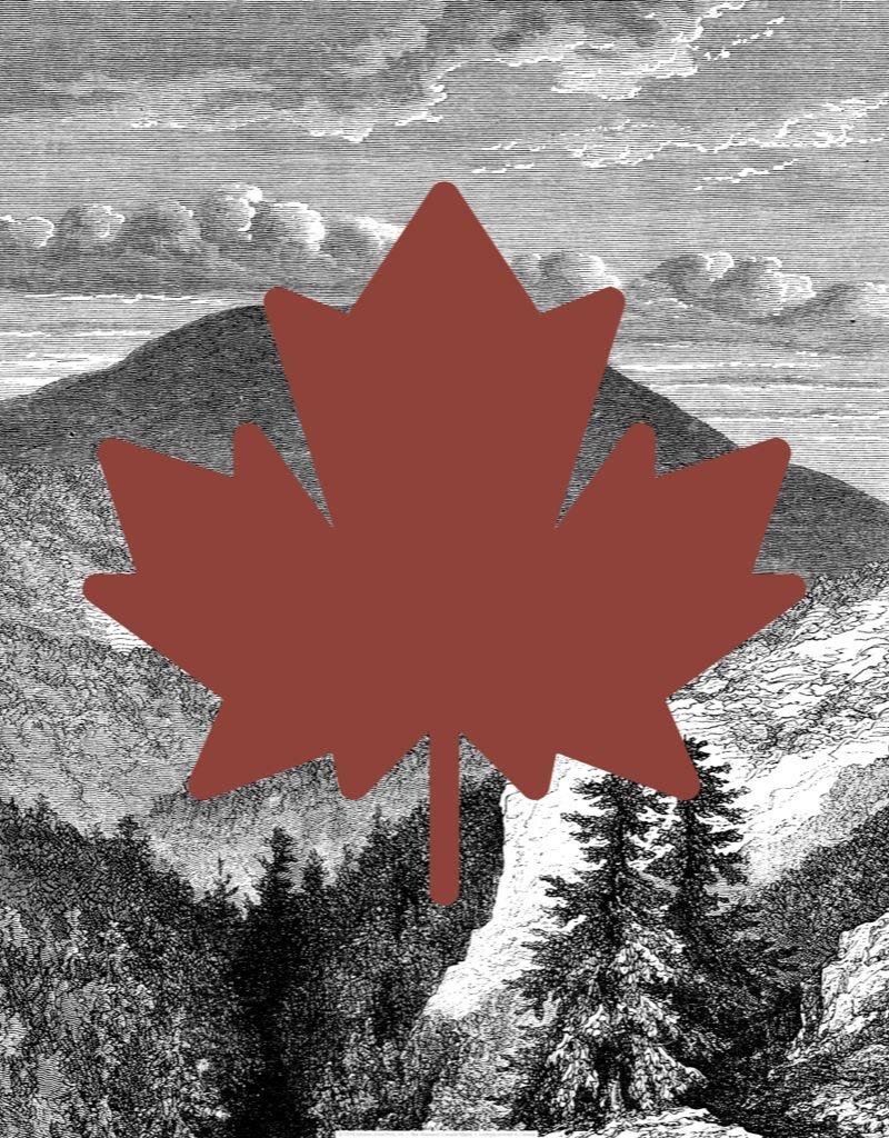 Vivid Print Bee Waeland   Canada Maple