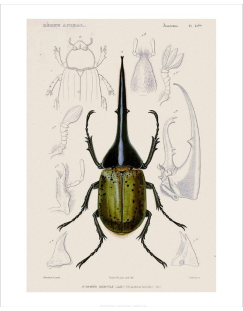 Vivid Print Bee Waeland | Educational Series: Beetle