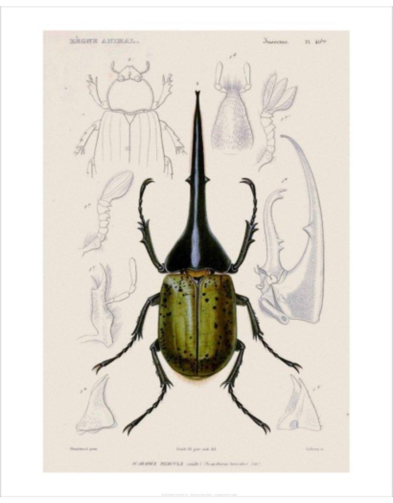 Vivid Print Bee Waeland | Educational Series: Beetle